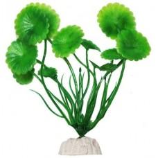 Уют ВК100 Растение Щитолистник зеленый 10см (C42817)