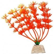 Уют ВК110  Растение Амбулия оранжевая 10см (C42794)