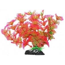 Уют ВК216 Растение Амбулия розово-зеленая 11см (C42795)